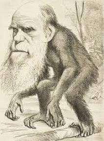 c darwin
